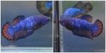 Thumbnail for fwbettashmp1540140009