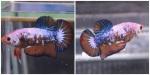Thumbnail for fwbettashmp1540141221