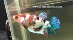 Thumbnail for fwbettashmp1542158180