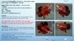 Thumbnail for fwbettashmp1553400218