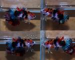 Thumbnail for fwbettashmp1553445004