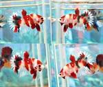 Thumbnail for fwbettashmp1566749603