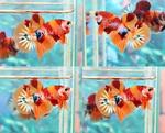 Thumbnail for fwbettashmp1566750204