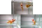 Thumbnail for fwbettashmp1566962935