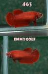 Thumbnail for fwbettashmp1568815212
