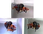 Thumbnail for fwbettashmp1569382792