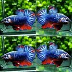 Thumbnail for fwbettashmp1571823610