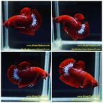 Thumbnail for fwbettashmp1597285298