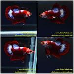Thumbnail for fwbettashmp1597285555