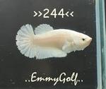 Thumbnail for fwbettashmp1597287009