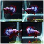 Thumbnail for fwbettashmp1597454706