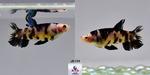 Thumbnail for fwbettashmp1597473002