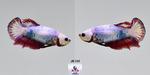 Thumbnail for fwbettashmp1597475407