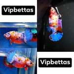 Thumbnail for fwbettashmp1597494008
