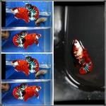 Thumbnail for fwbettashmp1597494607