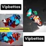 Thumbnail for fwbettashmp1597495207