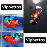 Thumbnail for fwbettashmp1597497603