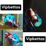 Thumbnail for fwbettashmp1597498203