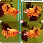 Thumbnail for fwbettashmp1597573205