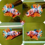 Thumbnail for fwbettashmp1597573206