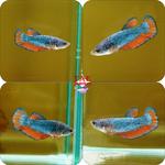 Thumbnail for fwbettashmp1597573207