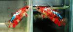 Thumbnail for fwbettashmp1611243612