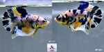 Thumbnail for fwbettashmp1634662803