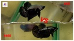Thumbnail for fwbettashmp1635054005