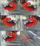 Thumbnail for fwbettashmp1635143613