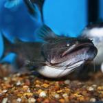 fwcatfish&1545545436 Thumbnail