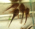 fwcatfish&1571662802 Thumbnail