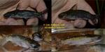 fwcatfish&1612650615 Thumbnail