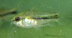 Thumbnail for fwcatfishc1567005006