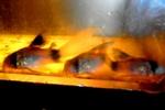 Thumbnail for fwcatfishc1624831803