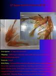 Thumbnail for fwcatfishp1572147887