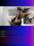 fwcatfishp&1632016225 Thumbnail
