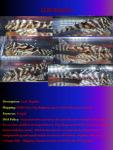 fwcatfishp&1632016250 Thumbnail