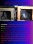 fwcatfishp&1632017852 Thumbnail
