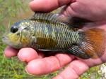 Thumbnail for fwcichlids1569095402