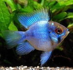 fwcichlids&1569347405 Thumbnail