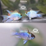 Thumbnail for fwcichlids1634439911
