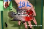 fwflowerhorn&1542187750 Thumbnail