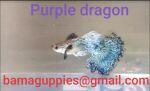 fwguppies&1604020233 Thumbnail