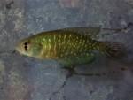 fwkillifish&1534340407 Thumbnail