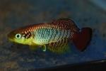fwkillifish&1534467601 Thumbnail