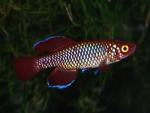 fwkillifish&1534467604 Thumbnail