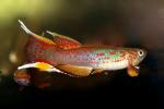 fwkillifish&1534512612 Thumbnail