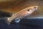 fwkillifish&1534515615 Thumbnail