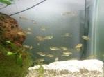 fwkillifish&1534518616 Thumbnail