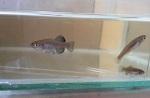 fwkillifish&1534522211 Thumbnail